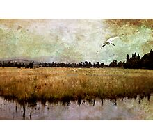 Wetlands-Yarra Glen Photographic Print