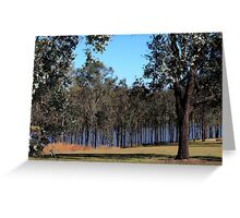 Tree Screen Greeting Card