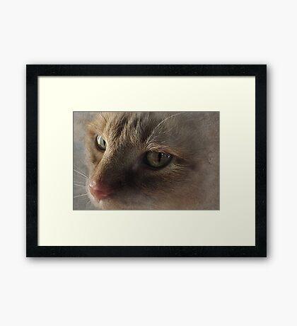 OZZIE Framed Print