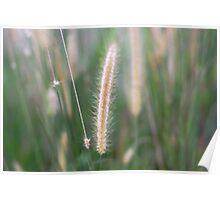 Fountain Grass Poster