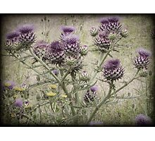 In a Thistle Field Photographic Print