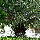 My Palm Tree by AuntDot