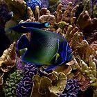 Neon fish by redscorpion