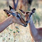 JUST A SMALL HUG? - BLACK-FACED IMPALA _Aepyceros melampus petersi by Magriet Meintjes