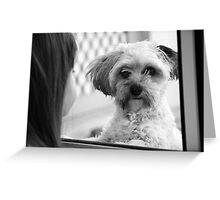 Oh please just let me in!  Greeting Card