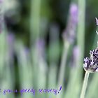 Get Well Card by Astrid Ewing Photography