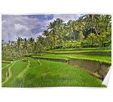 Gunung Kawi Rice Paddies Poster
