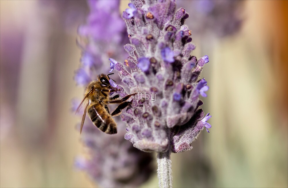 Purple Bokeh Bee by Josie Eldred