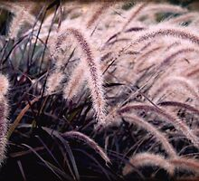 Feathery Tales by Margi