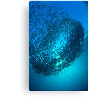 Bait Ball Canvas Print