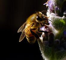 Lavender Bee by Gabrielle  Lees