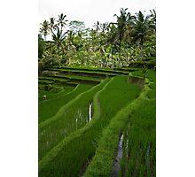 Rice paddies @ Gunung Kawi  Photographic Print