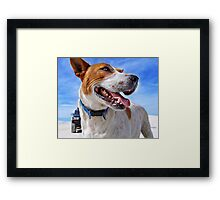 Australian Cattle Dog On Beach Framed Print