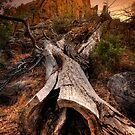 Timber by Bob Larson