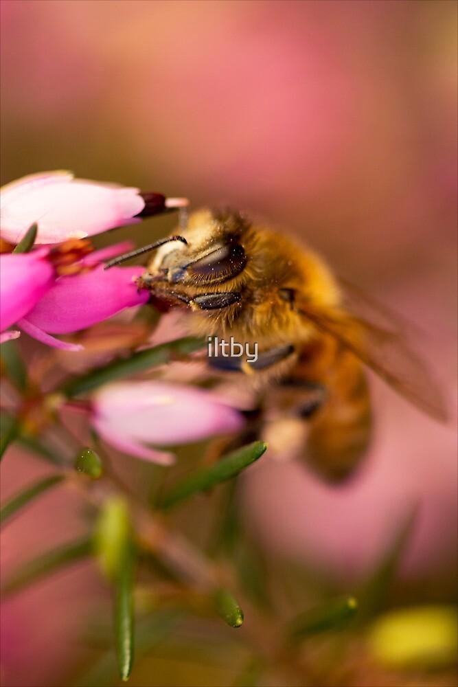 Cute Little Bee by Josie Eldred