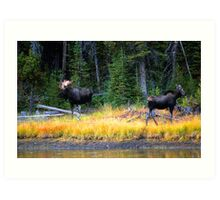 BULL AND COW MOOSE Art Print