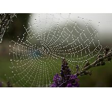 Spiders Web Photographic Print