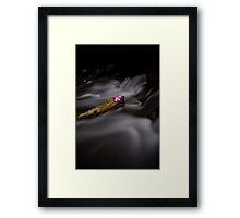 beauty within chaos  Framed Print
