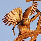 THE GIANT EAGLE OWL - and the weavers nest by Magriet Meintjes