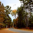 Country Road by Margi