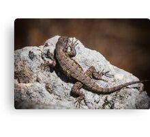 Mountain Lizard Sunbathing Canvas Print