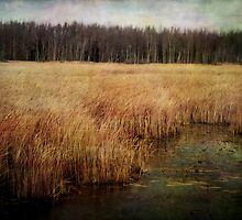 Wye Marsh III by Margi
