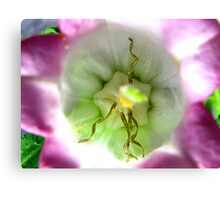 Straight Macro - Pink and White Variety Canvas Print
