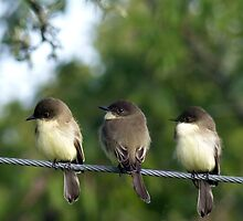 Let's Perch Together by Penny Odom