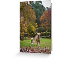 Winery Dogs Retrievers Greeting Card