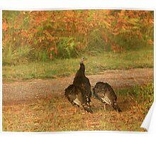 Wild Turkeys Poster