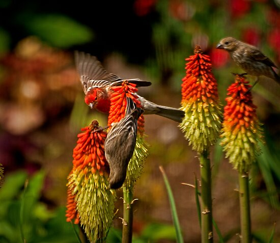 A Feast For Finches by Kathy Weaver