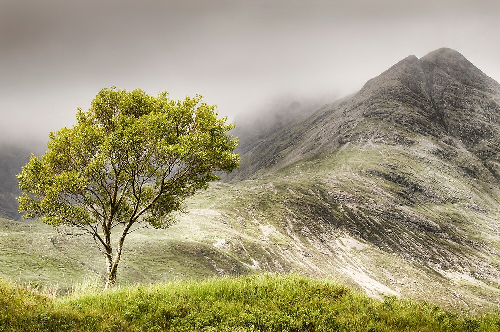 Lone Birch by John Dewar