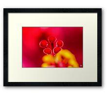 Scarlet Pistol Framed Print
