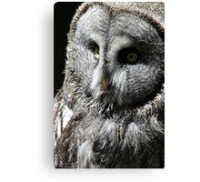 Hedwig  Canvas Print