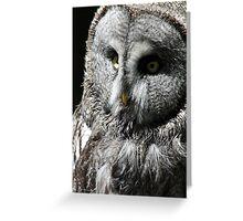 Hedwig  Greeting Card