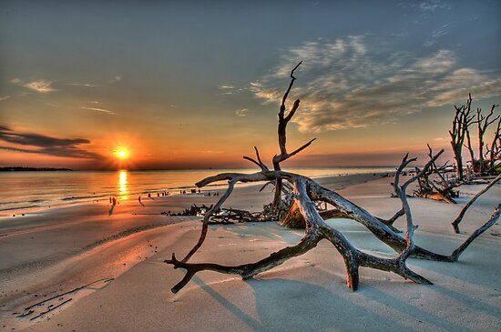 Driftwood Beach by J. Day