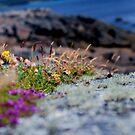 Sea Grass on the Cliff by Rebecca Eldridge