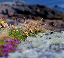 Sea Grass on the Cliff by Rebecca Eldridge