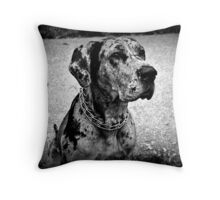 Black and White Handsome Dog Throw Pillow