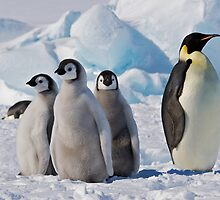 Snow Hill Island Emperor Penguin Rookery by RobertCave