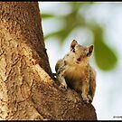 Curious Me by Neeraj Nema
