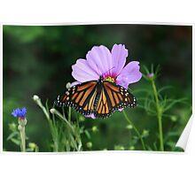 Butterfly Feast Poster