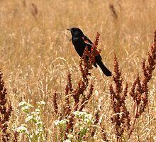 Red-winged Black Bird by Sheryl Gerhard