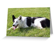 Angel - our beautiful Border Collie! Greeting Card