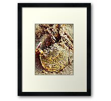 Tiger Look-A-Like? Framed Print
