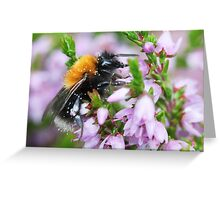 Bumble bee in Heather Greeting Card