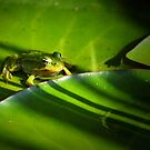 Baby frog practising camouflage by Javimage