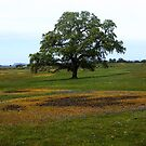 Springtime On Table Mountain - Table Mountain, Butte County, CA by Rebel Kreklow