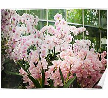 Pink Orchids with Soft Vignette Poster