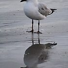Seagull Stillness by Amy Dee